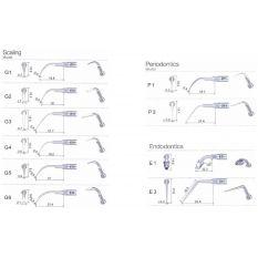 Ansa periodontica subgingivala P1
